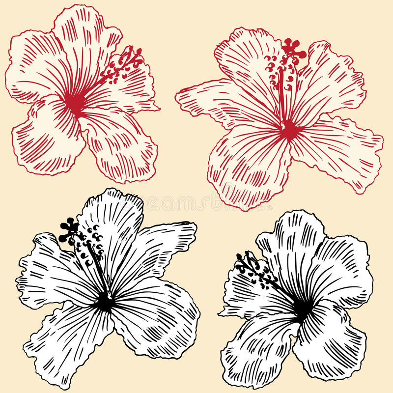 комплект hibiscus иллюстрация вектора