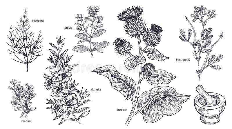 Комплект imedical заводов, цветков и трав бесплатная иллюстрация