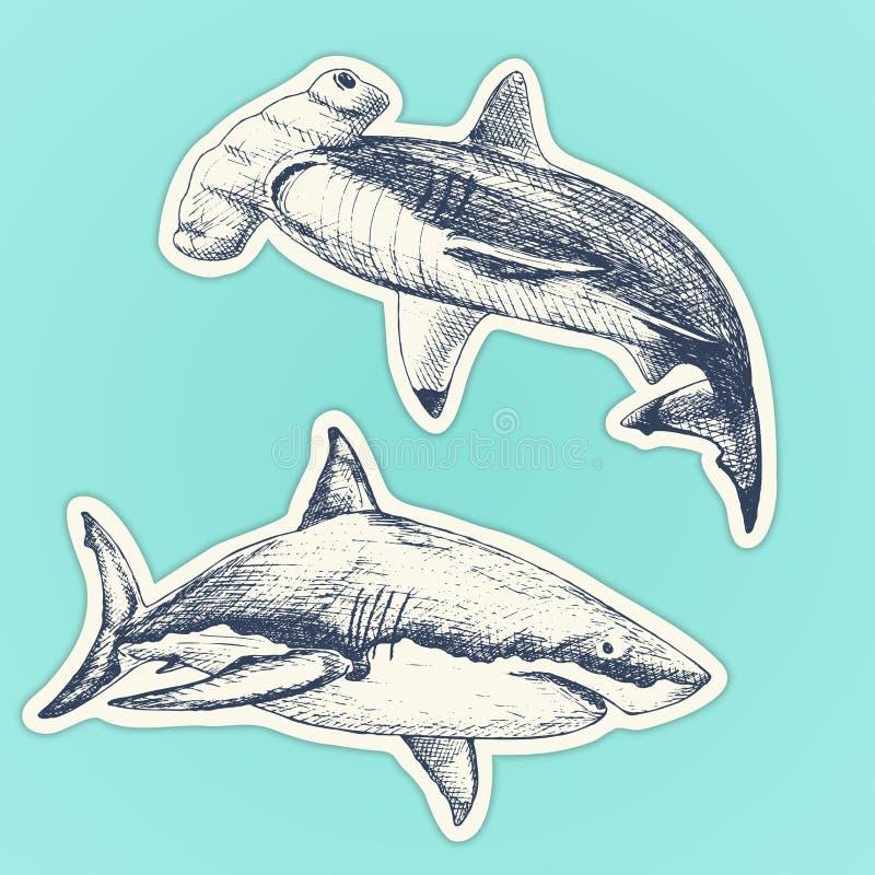 Комплект sharcks нарисованных рукой Vector иллюстрация белой акулы и акулы молота установите стикеры иллюстрация вектора