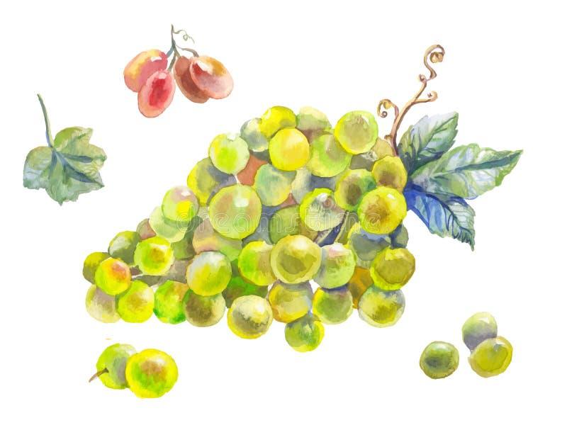 Комплект акварели виноградин бесплатная иллюстрация