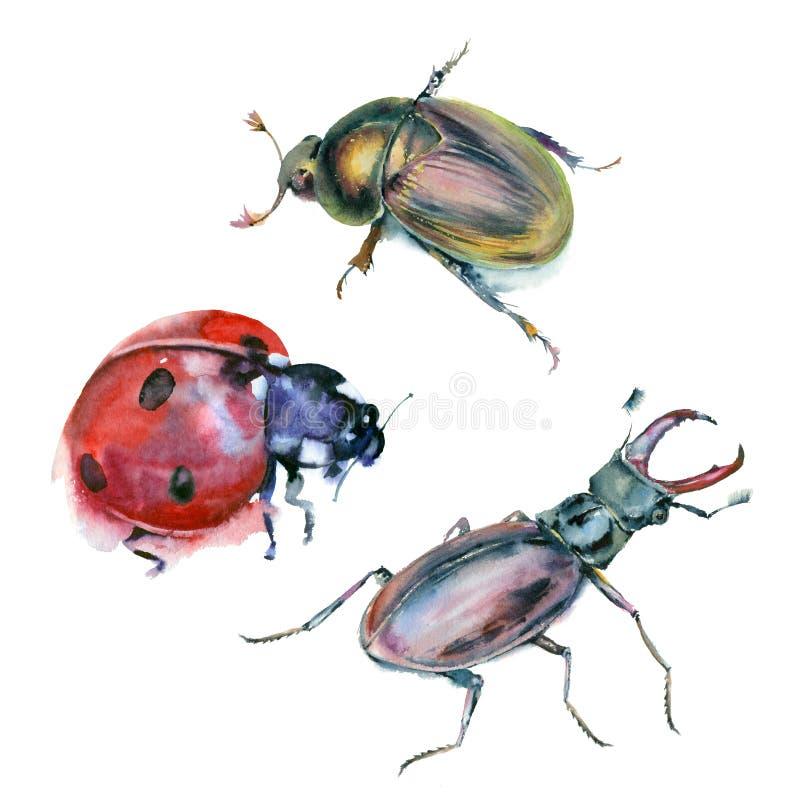Комплект акварели жуков иллюстрация штока