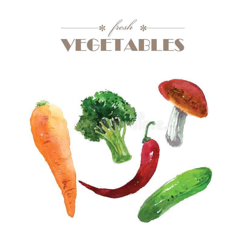 Комплект вектора овощей акварели свежих на белой предпосылке бесплатная иллюстрация