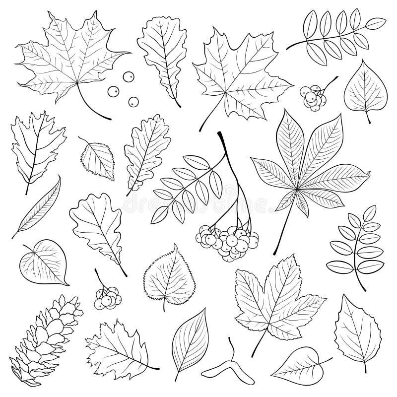 Комплект вектора различной, детальное дерево плана выходит, пук рябины и конус сосны на белую предпосылку бесплатная иллюстрация