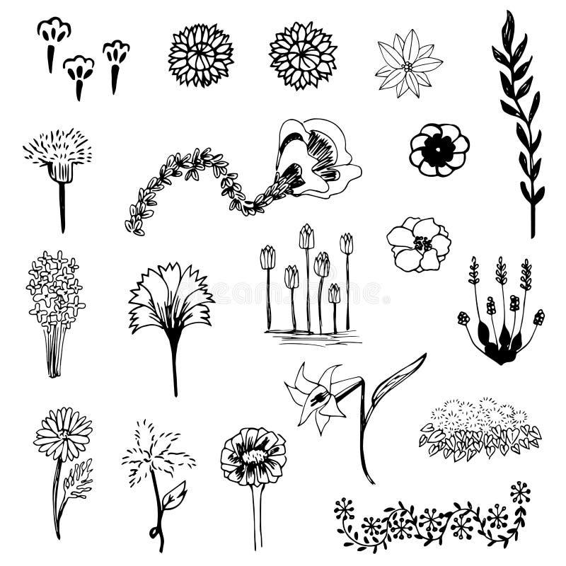 Комплект вектора эскиза цветка, эскиза doodle чертежа свободной руки на белой предпосылке иллюстрация вектора