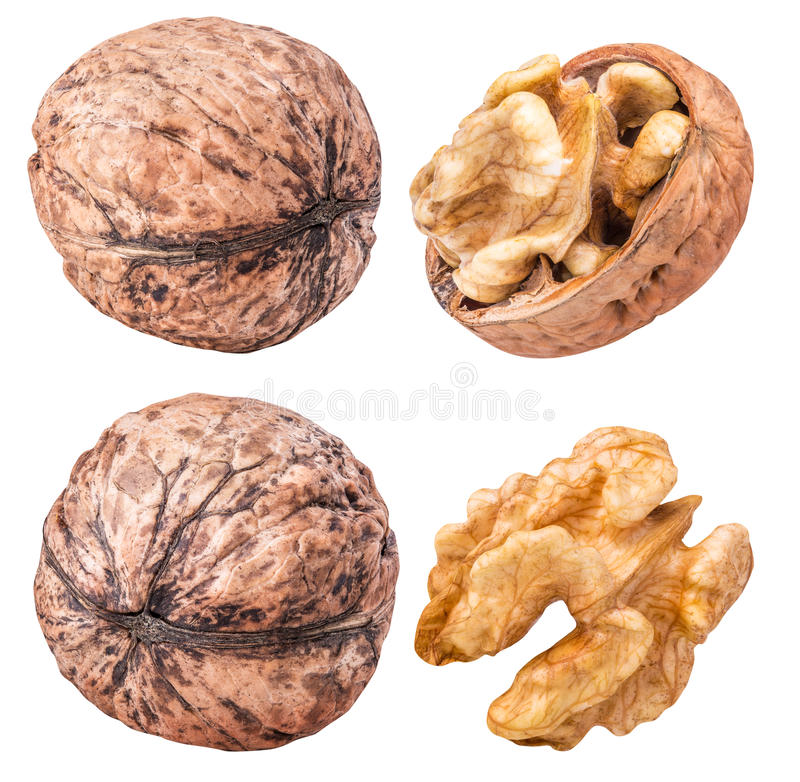 Комплект грецких орехов изолированных на белой предпосылке стоковое фото rf