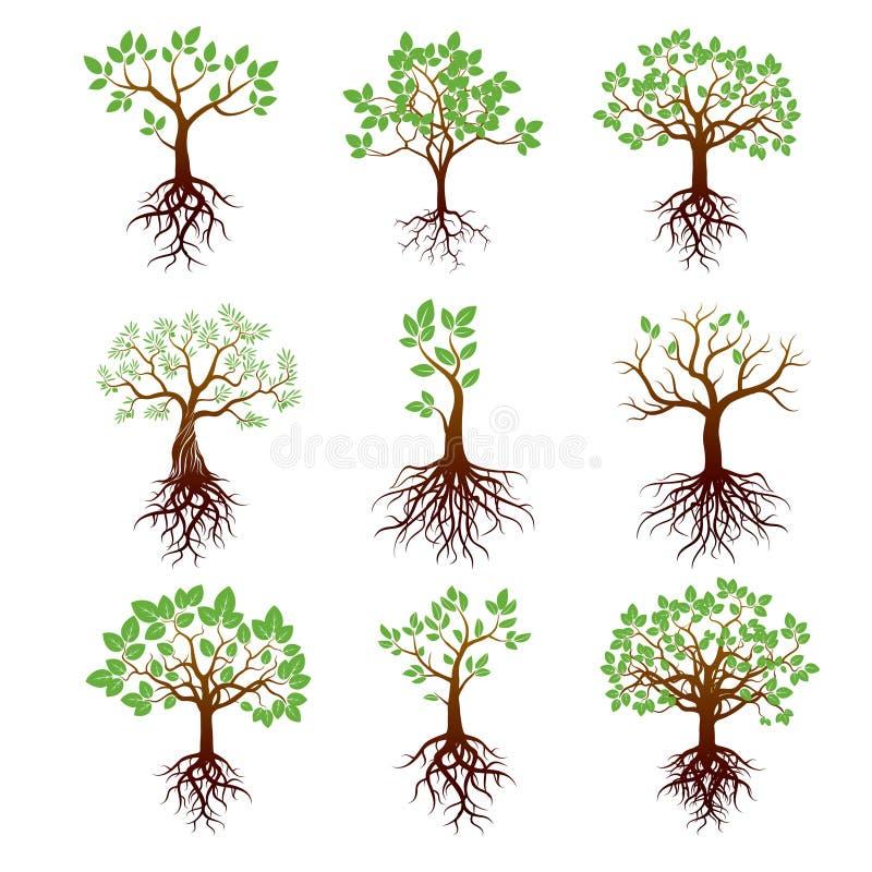 Комплект деревьев, зеленых листьев и корней иллюстрация вектора