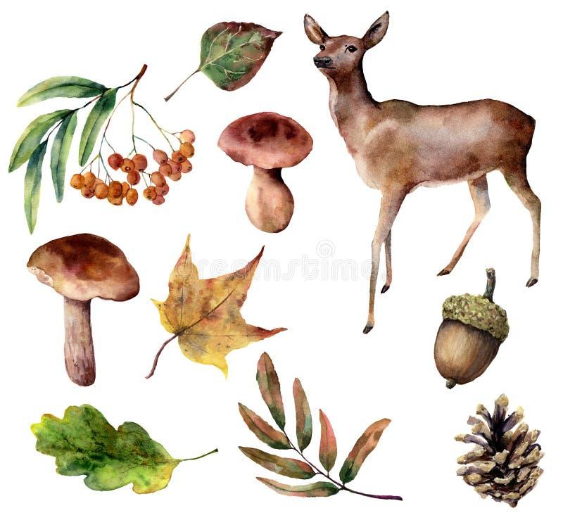 Комплект леса акварели Вручите покрашенный северный оленя, грибы, листья падения, конус сосны, рябину, жолудь изолированный на бе иллюстрация вектора