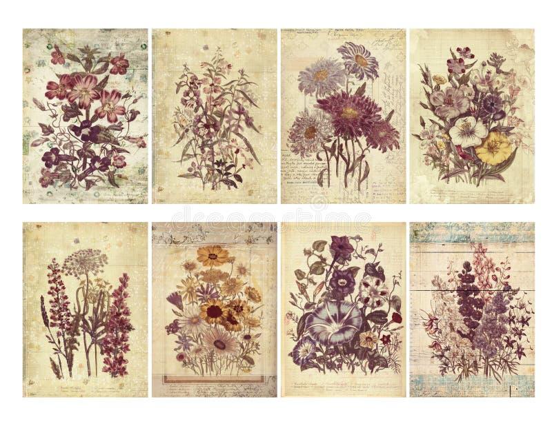 Комплект 8 затрапезных винтажных флористических карточек с текстурированными слоями и текстом. иллюстрация вектора