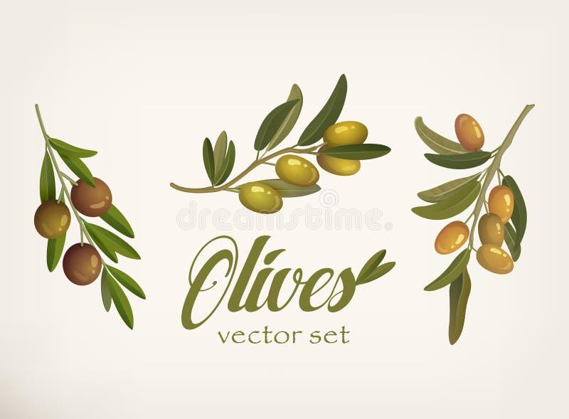 Комплект зеленых и желтых оливковых веток с листьями и ягодами с чернокожими Сырцовые вегетарианские еда и косметика иллюстрация штока