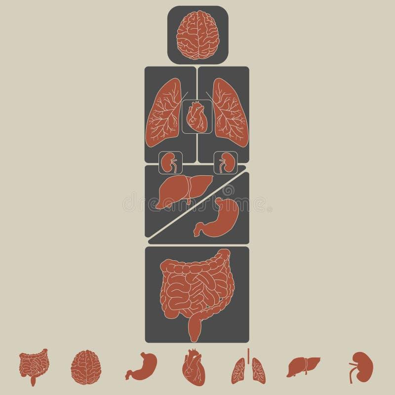 Комплект значка внутренних органов вектора иллюстрация штока