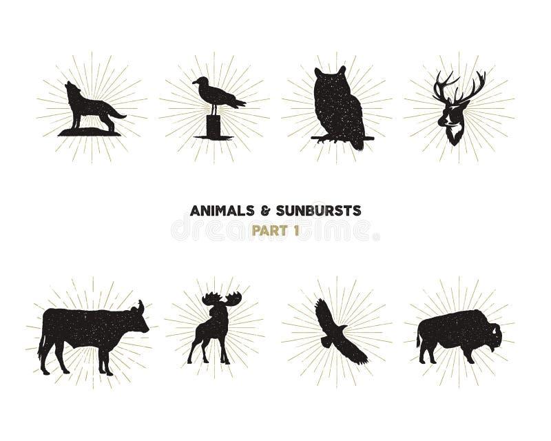 Комплект диаграмм и форм дикого животного с sunbursts на белой предпосылке Чернота silhouettes волк, олень, лоси бесплатная иллюстрация