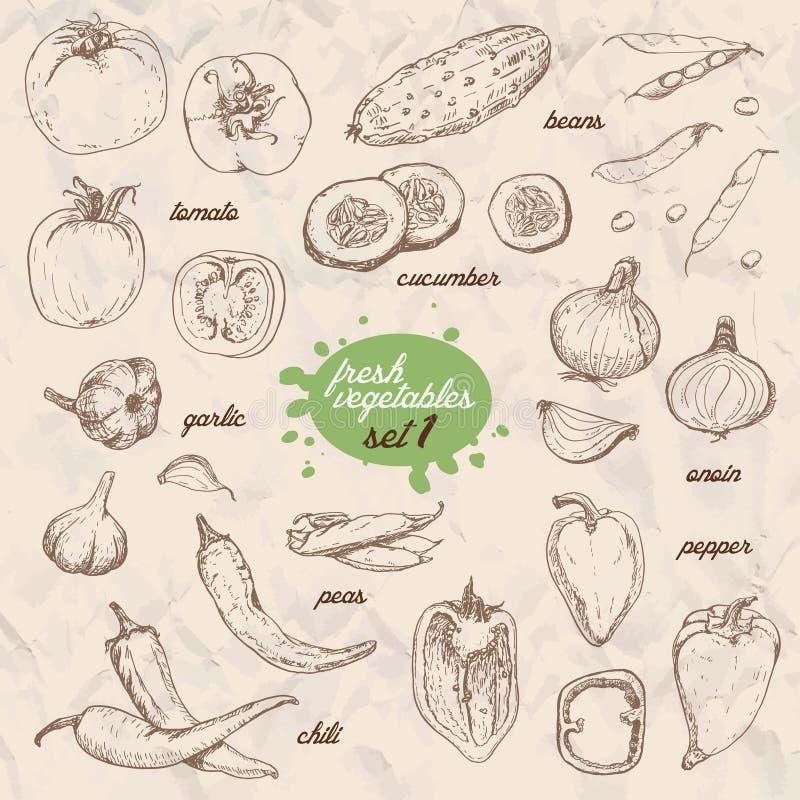 Комплект изолированных овощей в стиле эскиза Перец, томат, огурец, перцы, луки, чеснок, горохи и фасоли бесплатная иллюстрация
