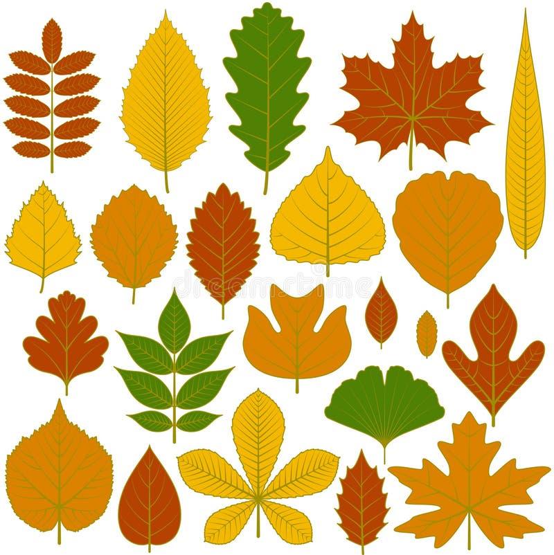 Комплект листьев дерева иллюстрация вектора