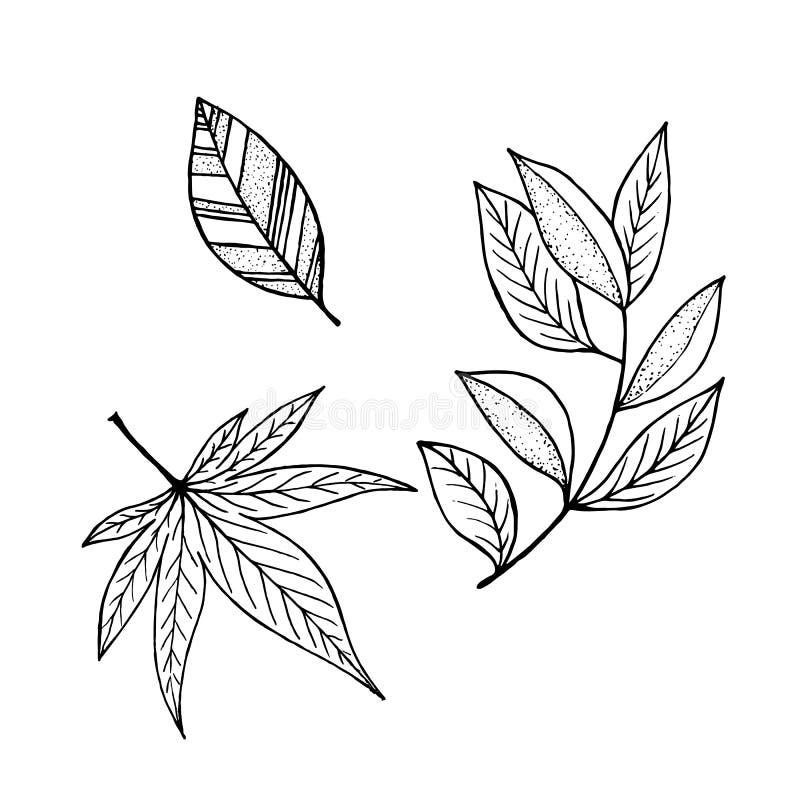 Комплект листьев, нарисованное собрание вектора руки выходит иллюстрация вектора