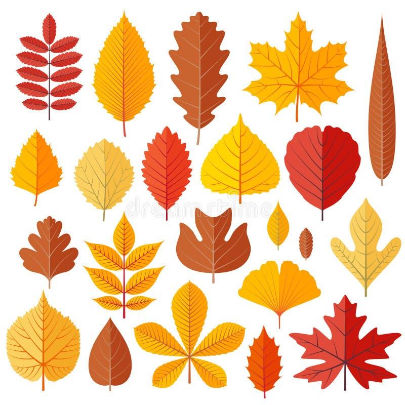 Комплект листьев осени дерева изолированных на белизне бесплатная иллюстрация