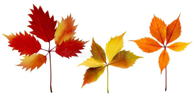 Комплект листьев осени изолированный стоковое фото rf