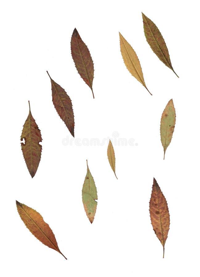 Комплект листьев осени изолированных на белой предпосылке стоковое фото rf