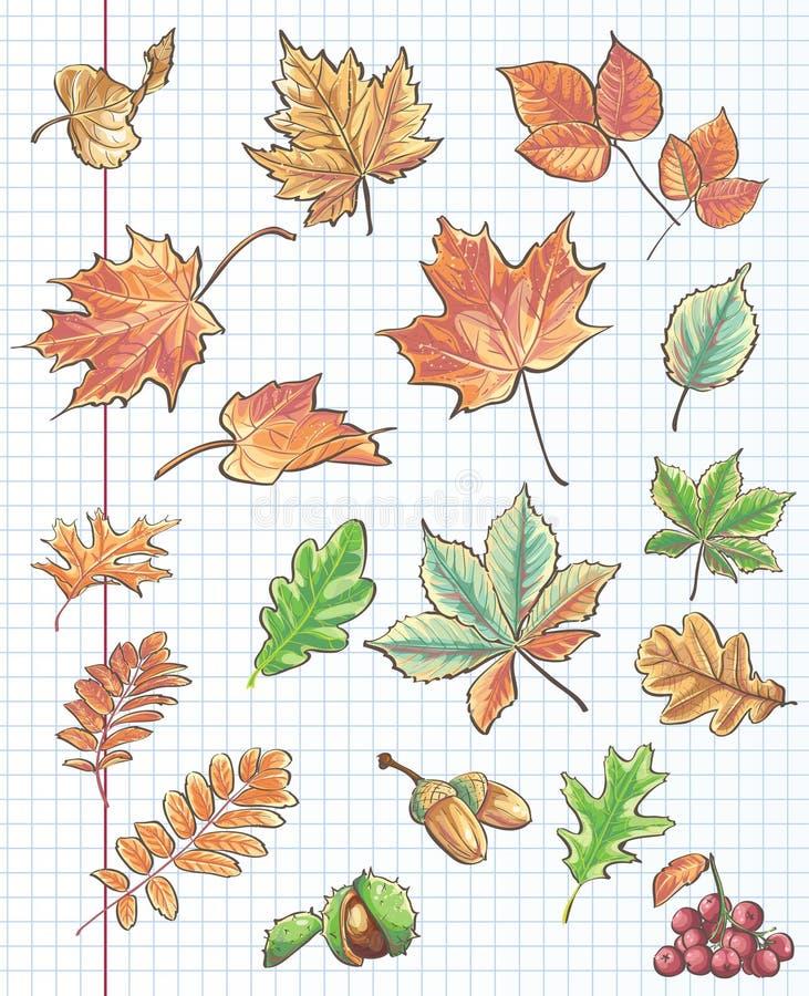 Комплект листьев осени, каштаны, жолуди и калина на предпосылке тетради покрывают в клетке бесплатная иллюстрация