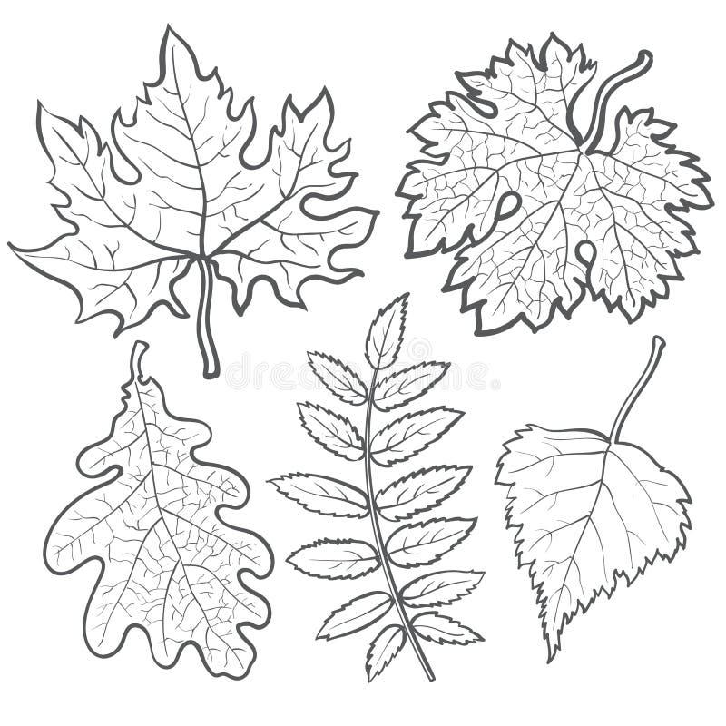 рекорд листья клена дуба березы рябины рисунки людей старшего