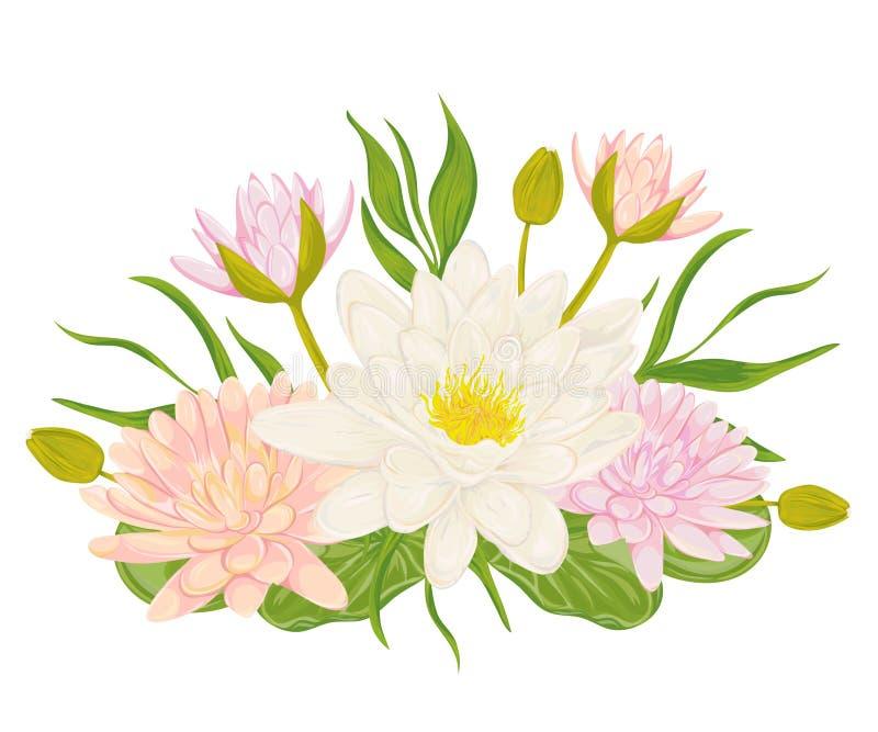 Комплект лилии воды Элементы дизайна собрания декоративные для wedding приглашений и поздравительых открыток ко дню рождения Цвет иллюстрация вектора