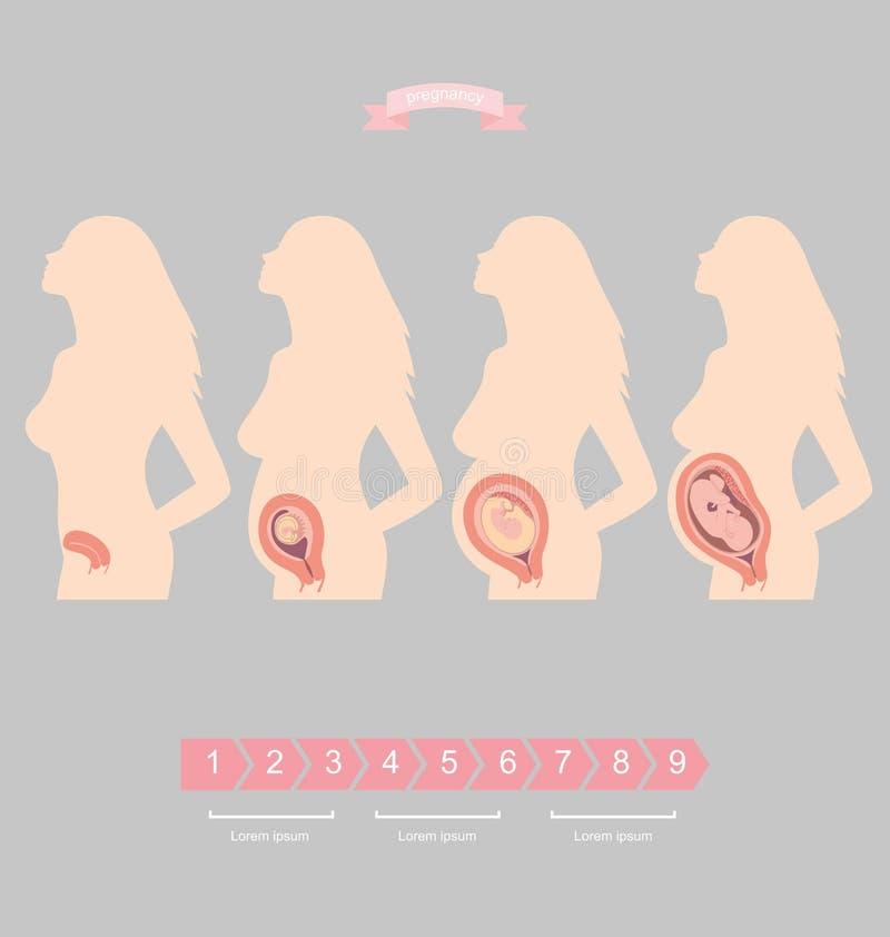 Комплект иллюстрации силуэта беременной женщины с зародышем иллюстрация штока