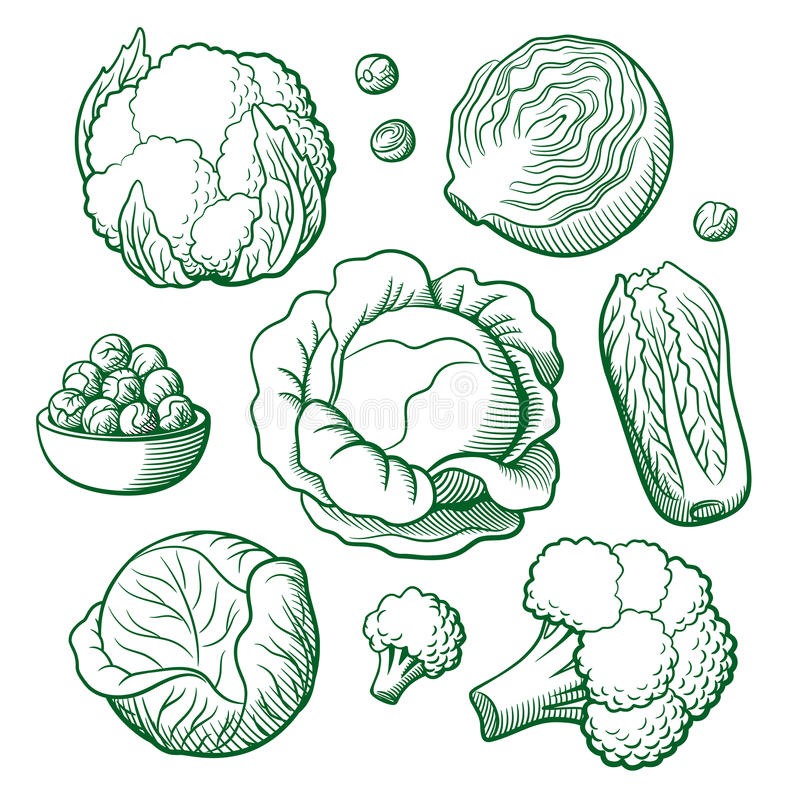 Комплект капусты бесплатная иллюстрация