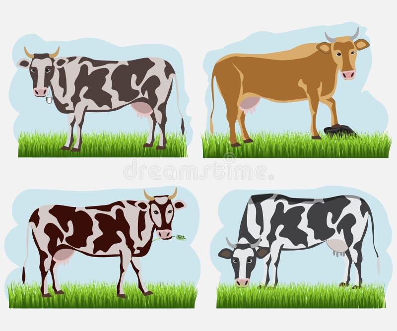 Комплект коровы, плоских значков Коровы вектора других цветов иллюстрация штока