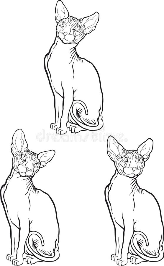 Комплект кота sphynx также вектор иллюстрации притяжки corel Тип татуировки иллюстрация штока