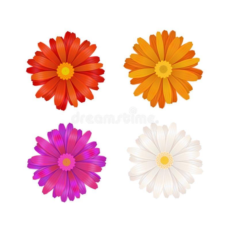 Комплект красочных цветков gerbera на белизне бесплатная иллюстрация