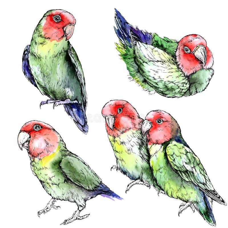 Комплект милых смешных попугаев неразлучника bamboo акварель японского типа иллюстрации иллюстрация вектора