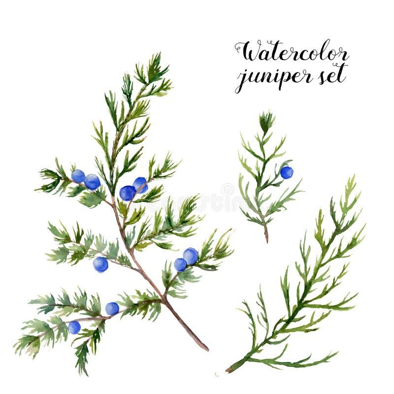 Комплект можжевельника акварели Вручите покрашенную вечнозеленую ветвь с ягодами на белой предпосылке Ботаническая иллюстрация дл бесплатная иллюстрация