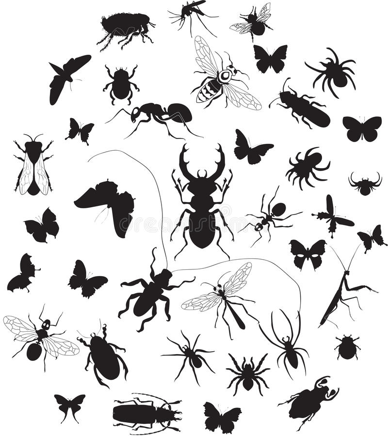 Комплект насекомых бесплатная иллюстрация