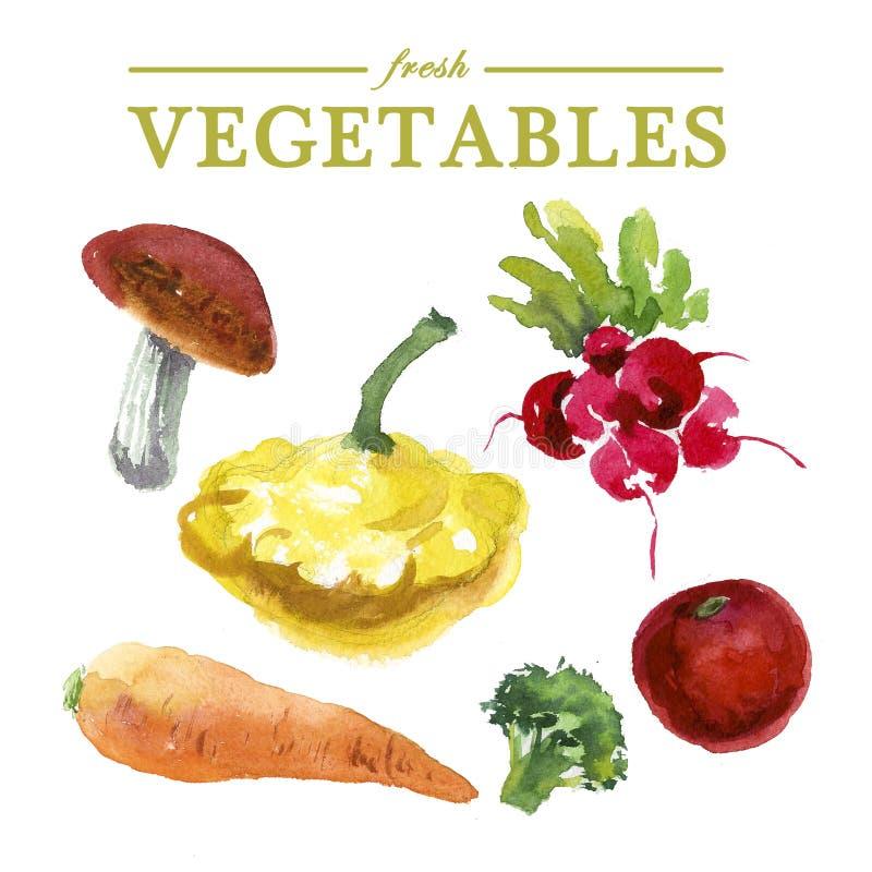 Комплект овощей акварели свежих иллюстрация вектора