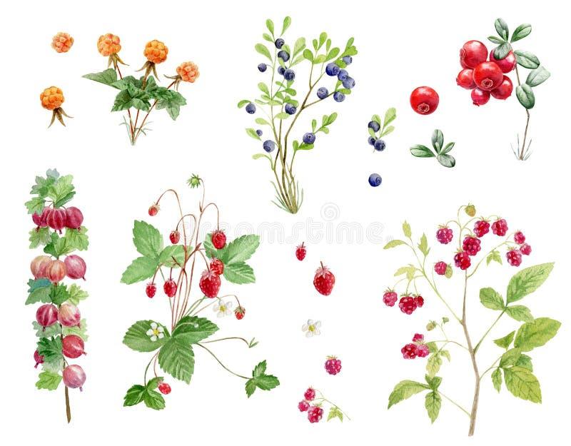Комплект доски сзажимом для бумаги cliparts ягоды акварели нарисованных рукой иллюстрация вектора