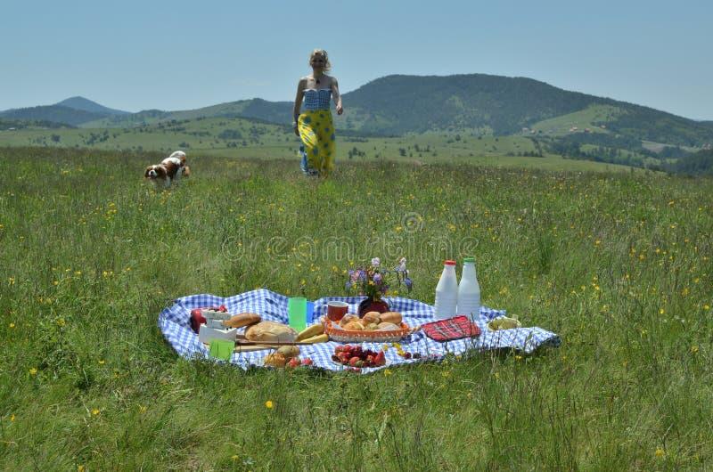 Комплект пикника женщины и собаки причаливая стоковое изображение rf