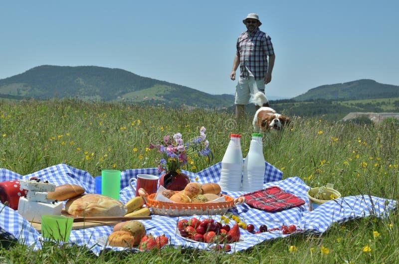 Комплект пикника человека и собаки причаливая стоковые изображения