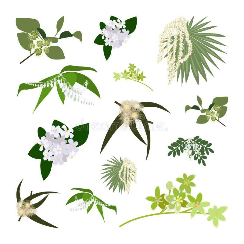 Комплект полевых цветков чертежа бесплатная иллюстрация