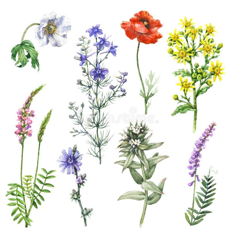 Комплект полевых цветков иллюстрация вектора
