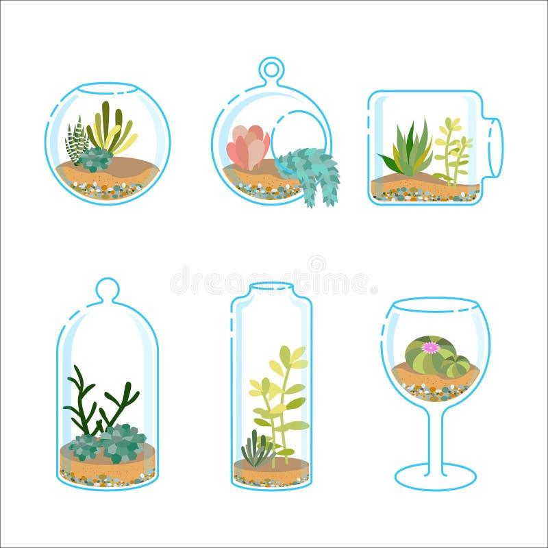 Комплект плоских florariums с различными succulents и кактусом для интерьера дизайна современного Завод в стеклянном аквариуме иллюстрация штока