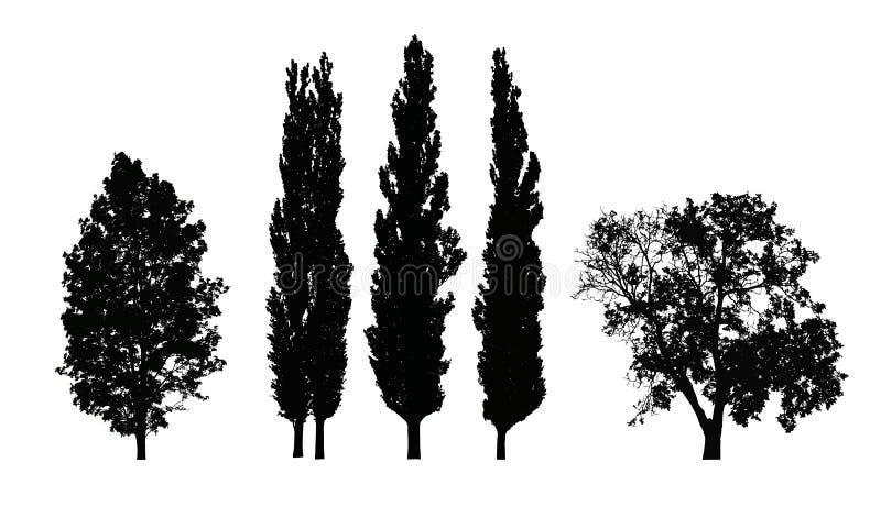 Комплект реалистических силуэтов вектора лиственных деревьев иллюстрация вектора