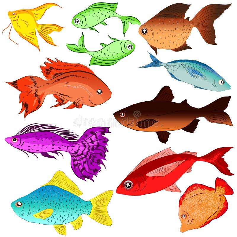 Комплект рыб иллюстраций одичало океан иллюстрация штока