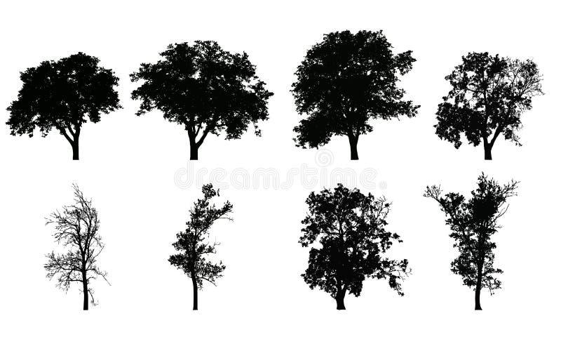 Комплект силуэтов вектора реалистических лиственных деревьев иллюстрация вектора