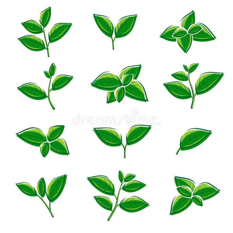 Комплект собрания лист зеленого чая вектор иллюстрация штока