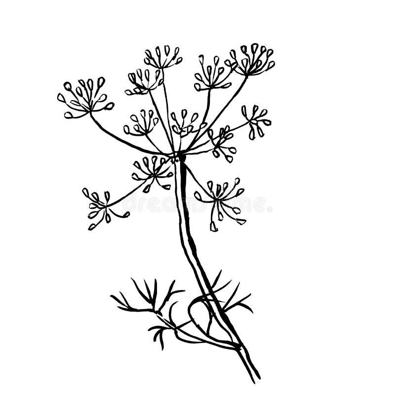 Комплект укропа изолированный на белой предпосылке Рука бесплатная иллюстрация
