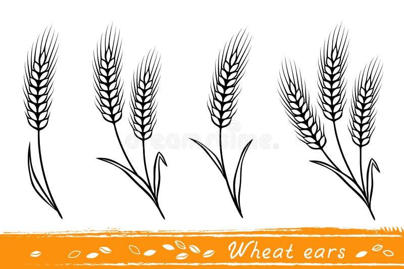 Комплект ушей пшеницы иллюстрация штока