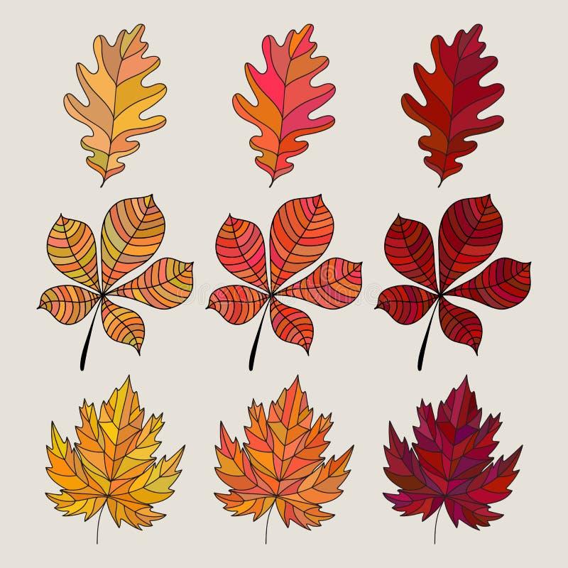 Комплект цветастых листьев осени также вектор иллюстрации притяжки corel Дуб, клен и каштан иллюстрация штока