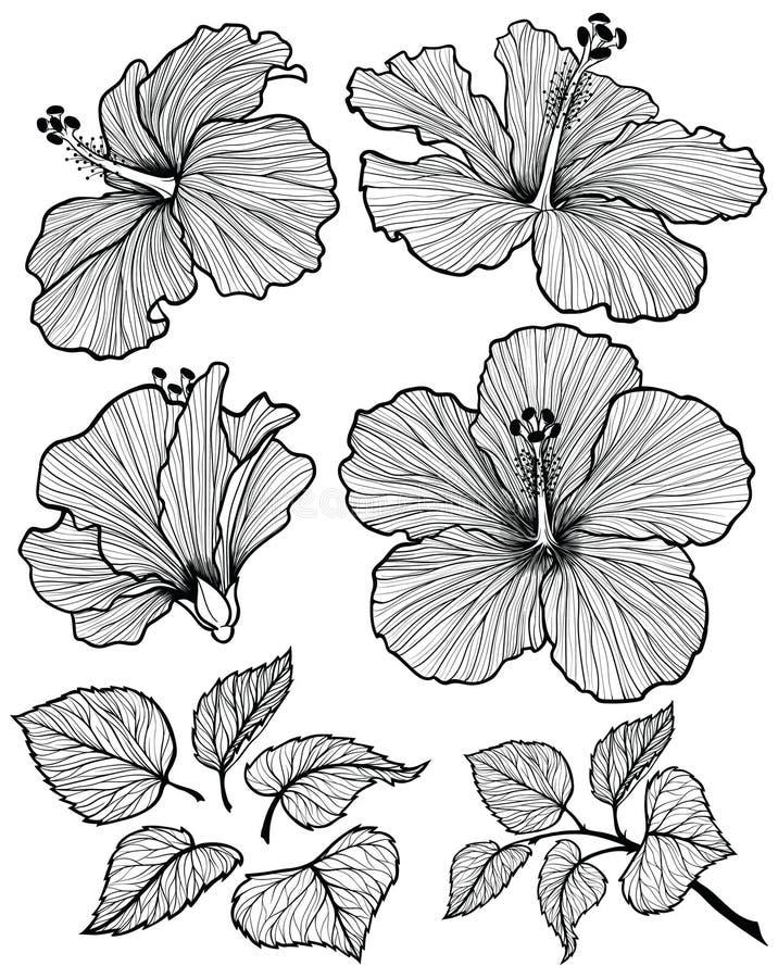 Комплект цветка гибискуса иллюстрация вектора