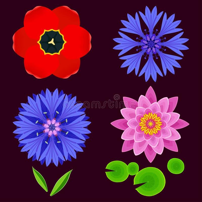 Комплект цветков лотоса, cornflower, тюльпана иллюстрация вектора