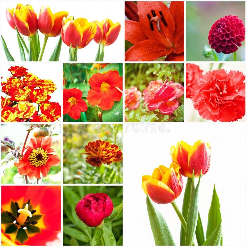 Комплект цветков Стоковая Фотография RF
