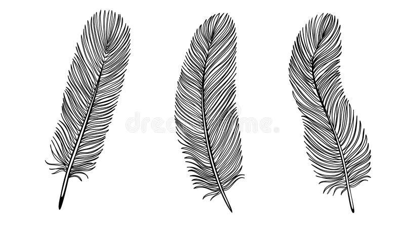 Комплект черно-белого пера. иллюстрация вектора